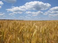 Плодородие земли, урожаи