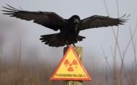 Опасность радиационного фона